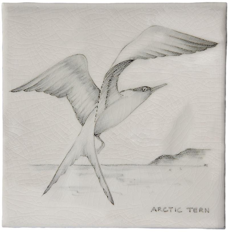 Marlborough Coastal & Moorlands Birds, Arctic Tern, Edinburgh Tile Studio